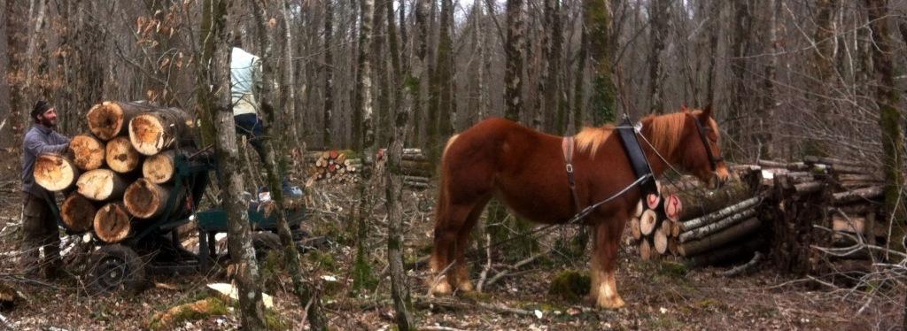 Exploitation de la forêt en traction animale
